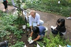 Hitomi plants the ginko-bilboa sapling.